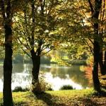 herfstbomen op hoge poten