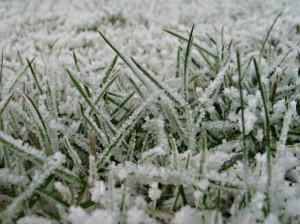 licht bevroren wit/groen grastapijt landschap