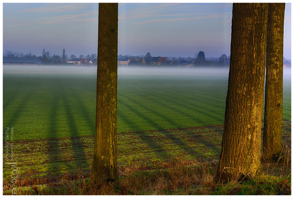 Misty Birds Morning