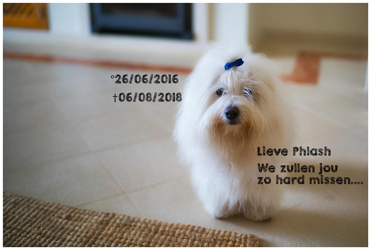 Lieve Phlash, we zullen je zo hard missen