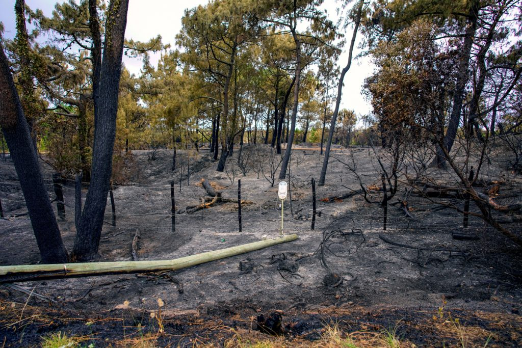 Omgeving nà bosbrand